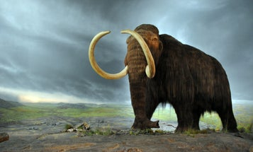 We are eating large animals into extinction