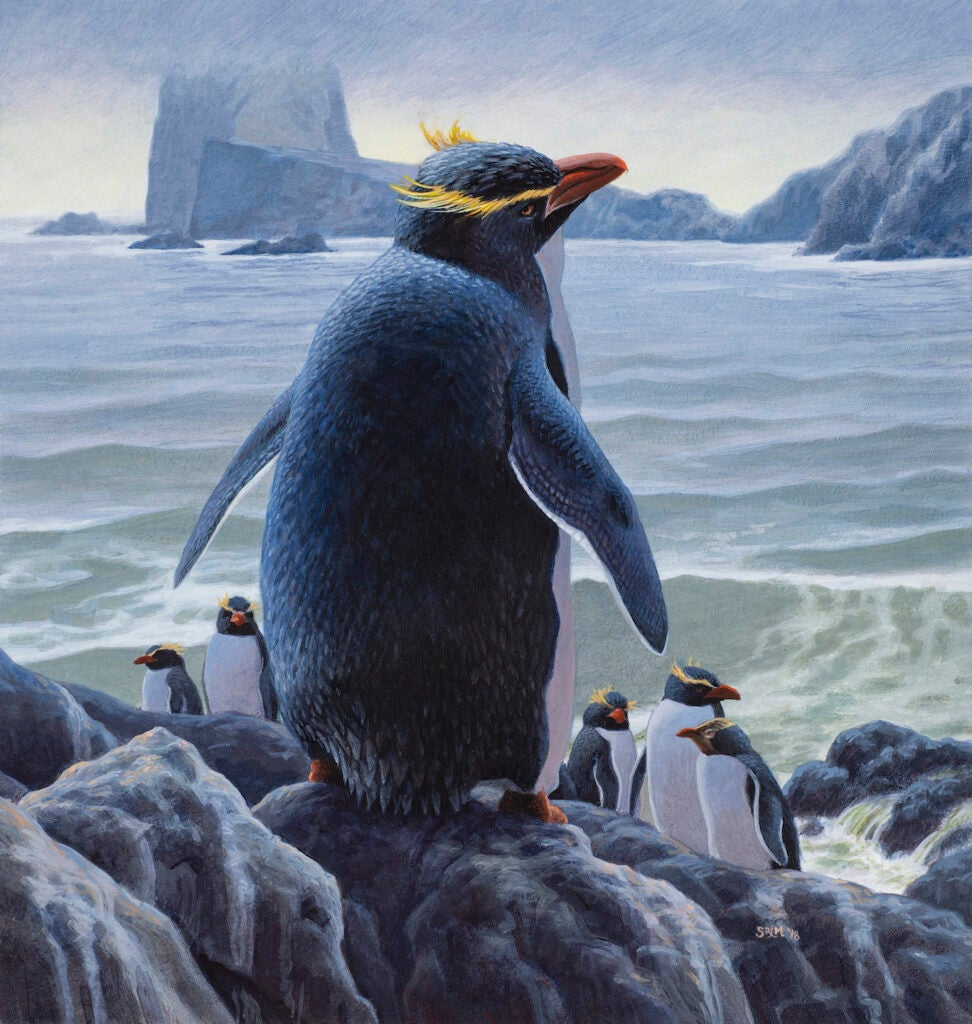 An artist's impression of two now-extinct penguin species.