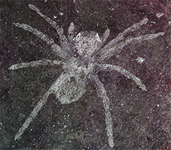 Fossilized spider glowing eyes