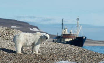 Climate change is pushing desperate polar bears, kangaroos, and other wildlife into human territory