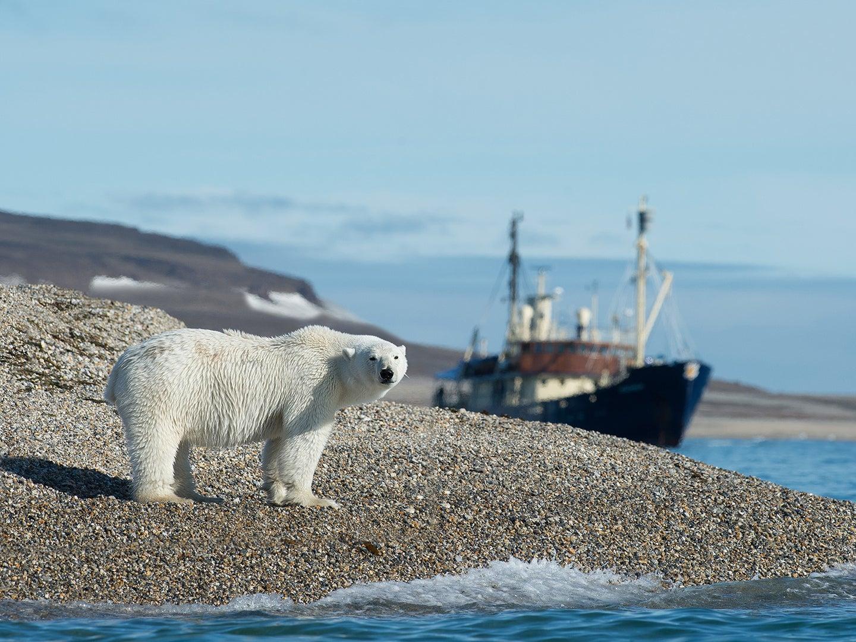 polar bear on sea shore