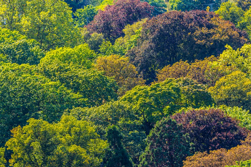 Tree forest above greening Earth satellite agriculture carbon