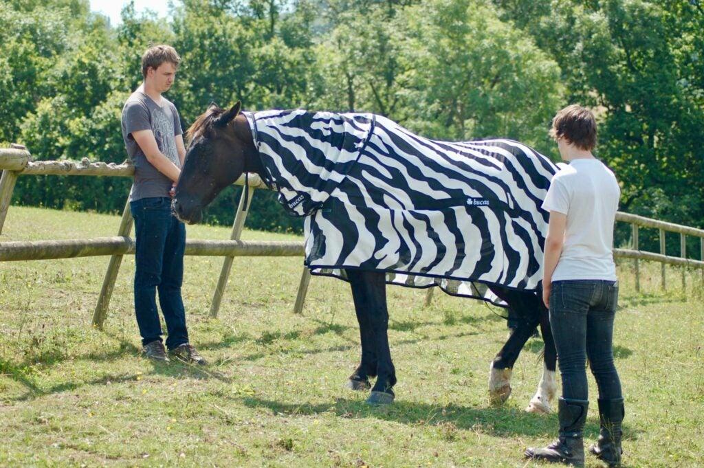 Horse in zebra's clothing