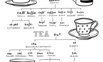 """How you say """"coffee"""" or """"tea"""" depends on ancient trade routes"""