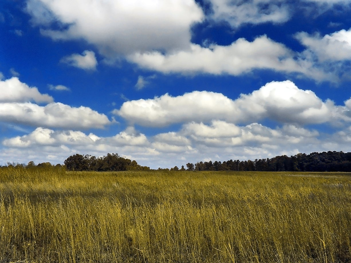 Cumulus clouds sky atmosphere climate change