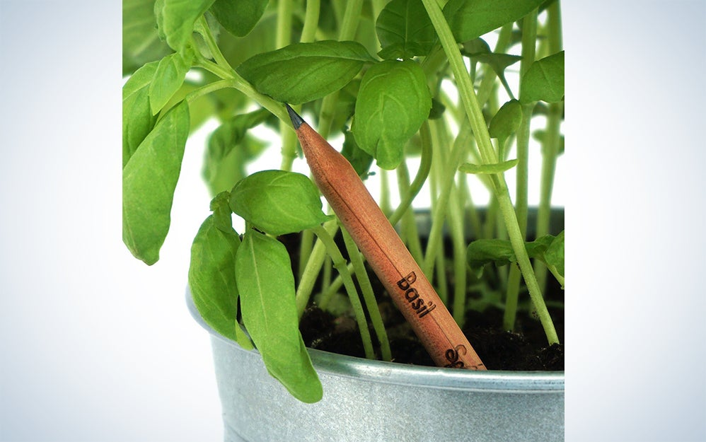 Sprout Pencil Herb Pack