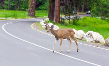 These states want you to eat more roadkill