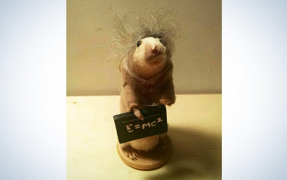Taxidermy Albert Einstein Mouse