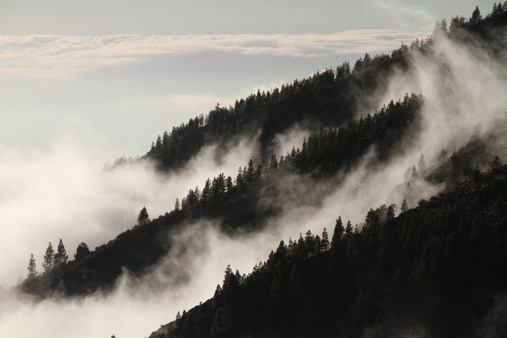 hills covered in trees and fog