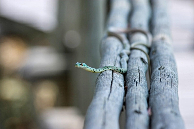 tiny snake snek on branch