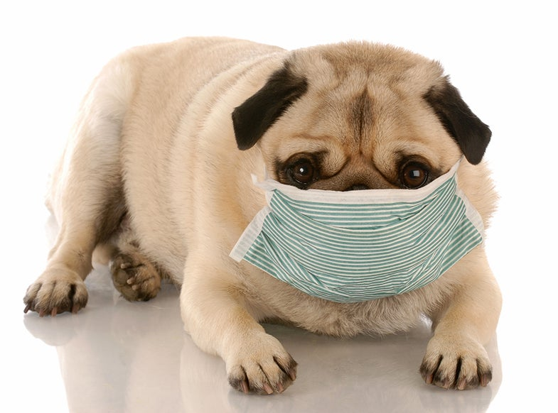 A dog in a medical mask