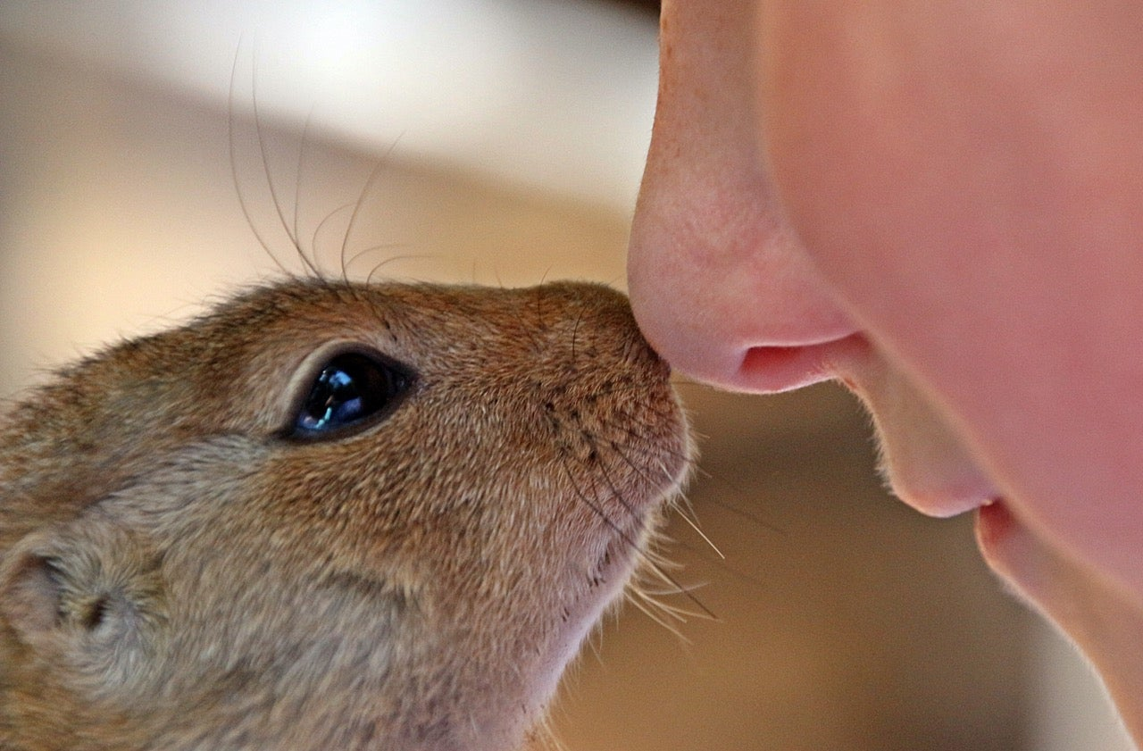 Humans have a better sense of smell than you think