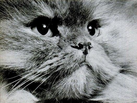 Meet The Original LOLCats [Vintage PopSci]
