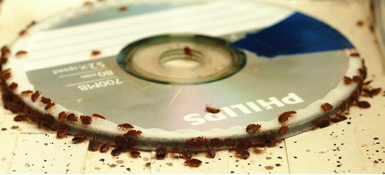 CD Feeder