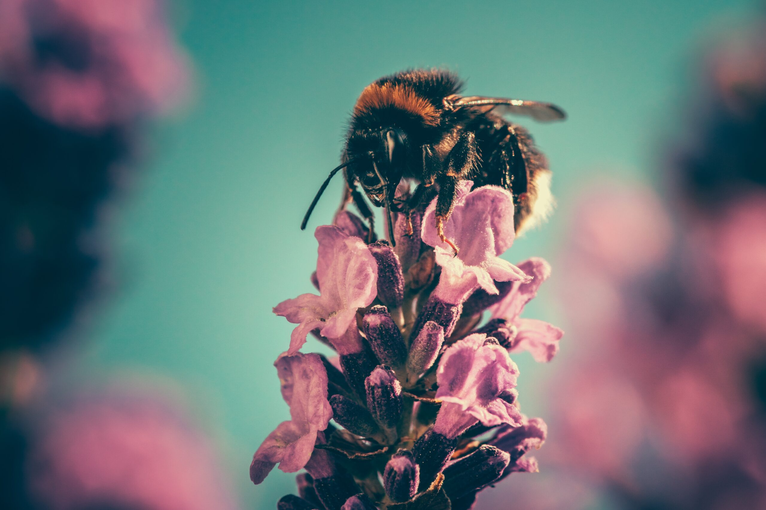 Here's What You Can Do To Help The Declining Bee Population