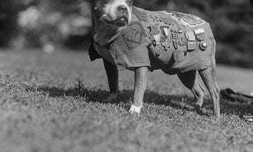 Honeywell Unveils Battle Kit For Dogs