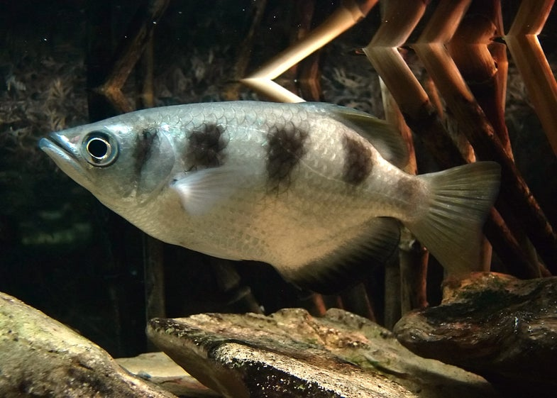 Fish Can Tell The Difference Between Human Faces