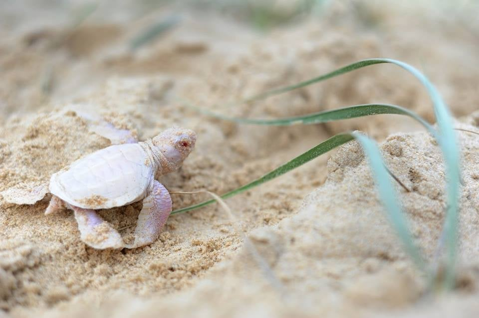 An Albino Sea Turtle, Animated Gravitational Waves, And Other Amazing Images Of The Week