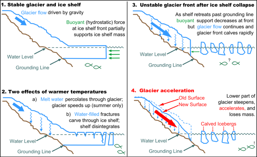 When ice shelves disintegrate, glaciers move out to sea.