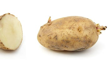 USDA Approves A Genetically Modified Potato With Possible Health Benefits