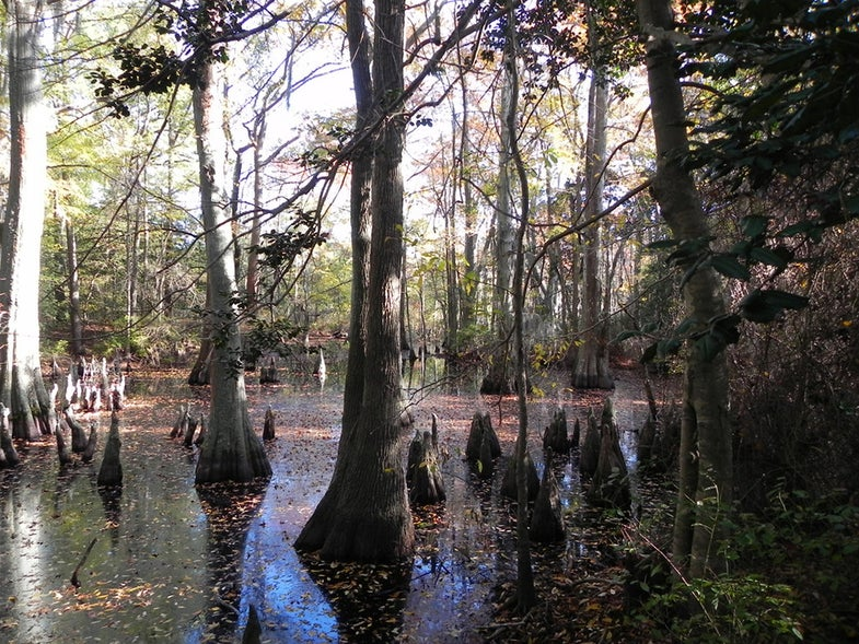 Want to save the planet? Don't drain the swamps.