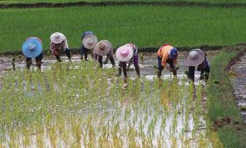 Rainy-Day Rice