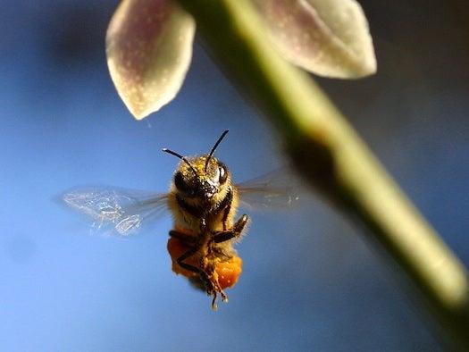 European Bee Sperm Bank Will Improve U.S. Bee Gene Pool