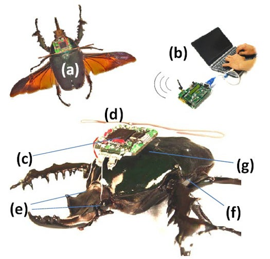 Darpa's Cyborg Insect Spies, Now Nuclear-Powered