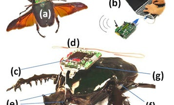 Video: DARPA's Remote-Controlled Cyborg Beetle Takes Flight