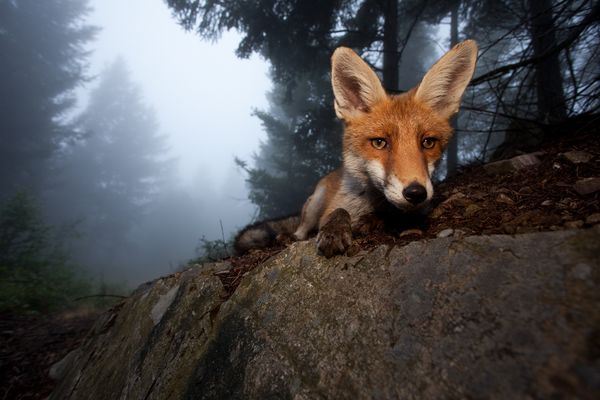 The Most Amazing Images of the Week, November 7-11, 2011