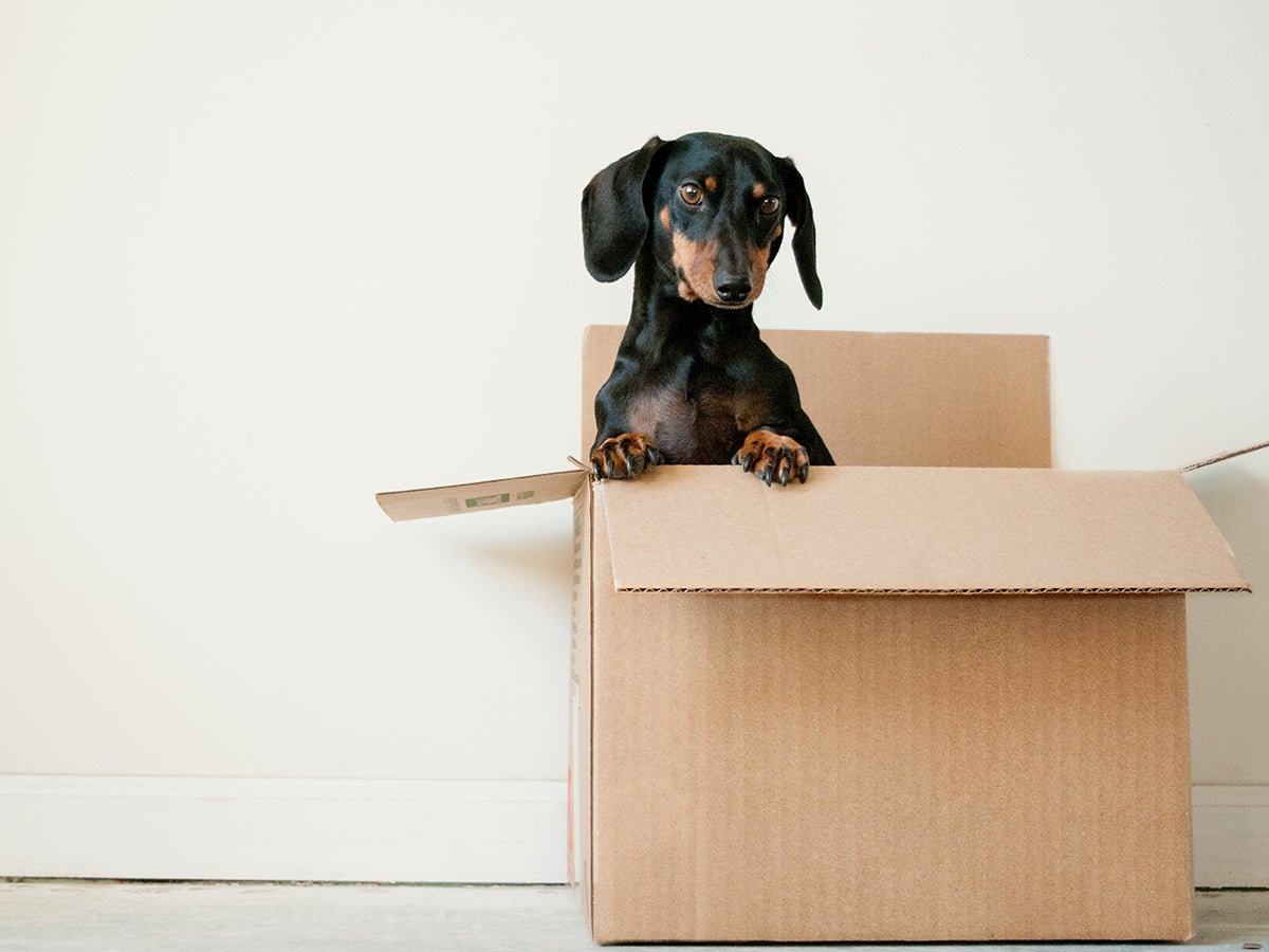 Moving is hard. Let these apps do the heavy lifting.