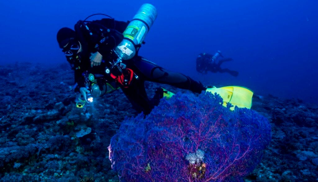Researchers studying a coral reef