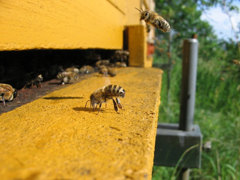 South Carolina Accidentally Sprayed Millions Of Bees With Pesticides