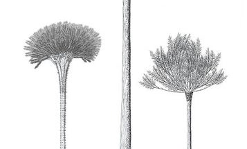 Millions of years ago, hollow trees literally tore themselves apart to grow