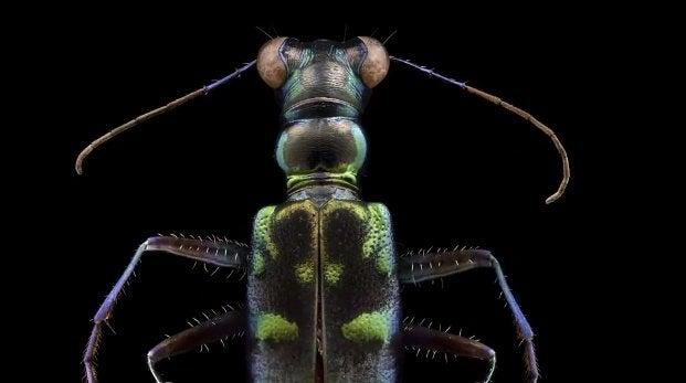 """""""Bugs"""