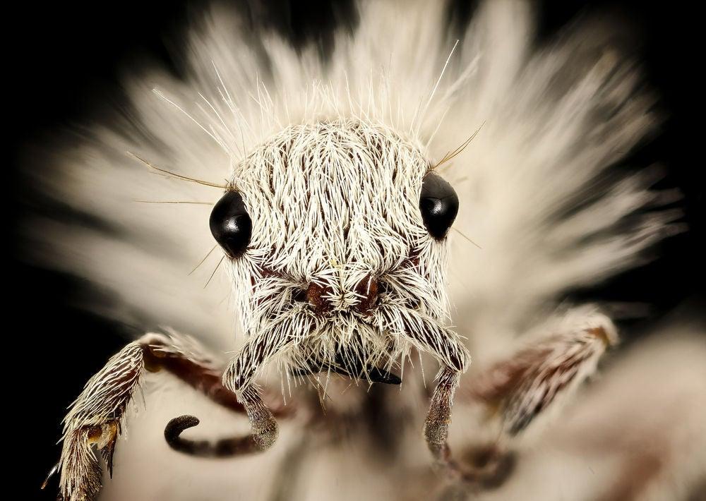Hipster wasp