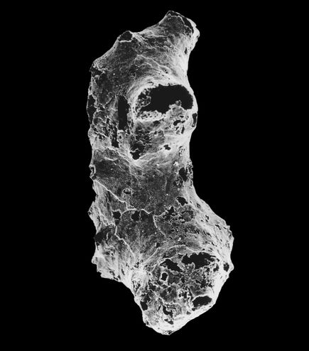 Found: The Oldest Animal Ever on Planet Earth
