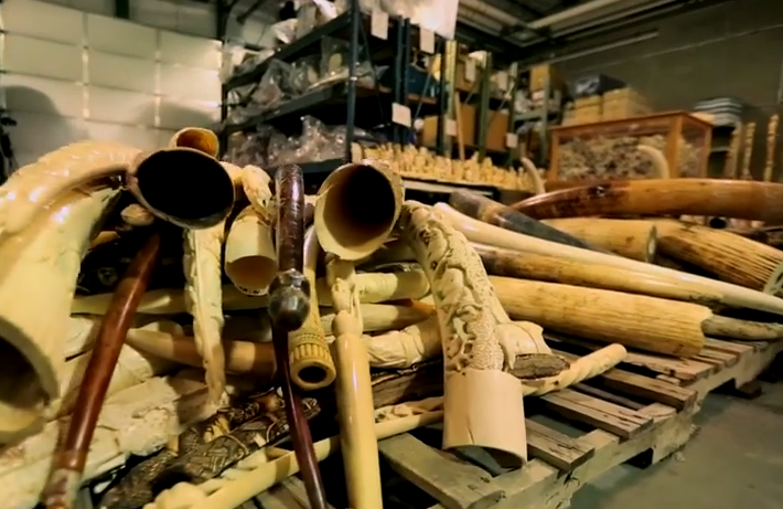 For The First Time, China Crushes Tons Of Ivory Into Dust