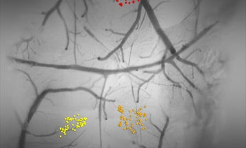 Scientists Map the Mouse Taste Cortex, Pinpointing Brain Regions That Detect Certain Flavors
