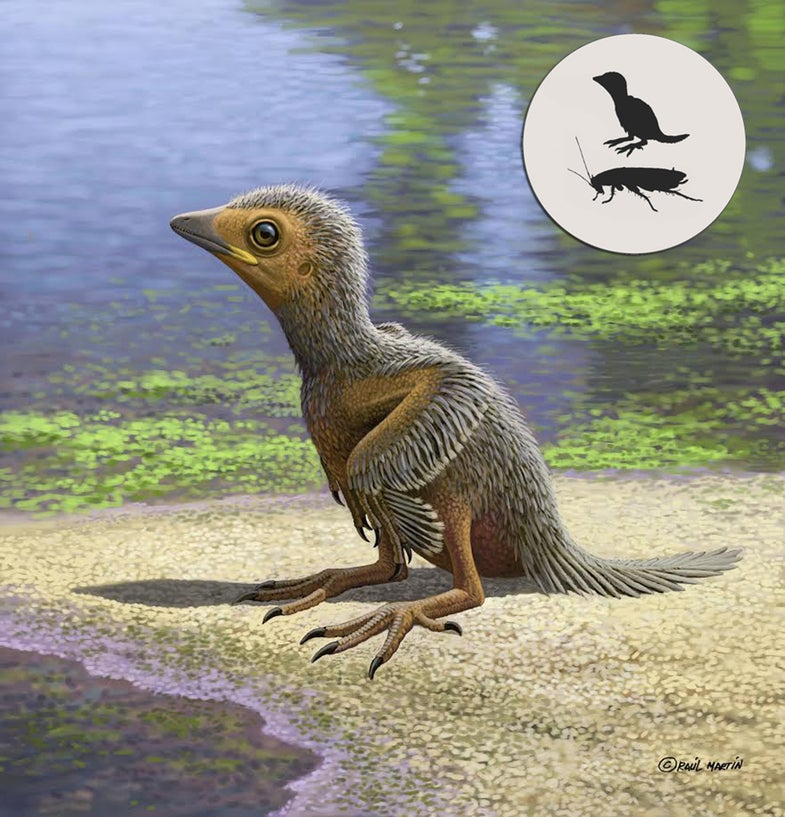 This little baby bird lived 127 million years ago and died the size of your pinky