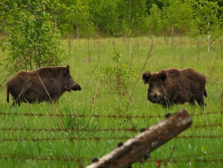 The Evacuated Chernobyl Is Now Teeming With Wildlife