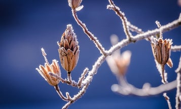 Why we have more and more days without frost