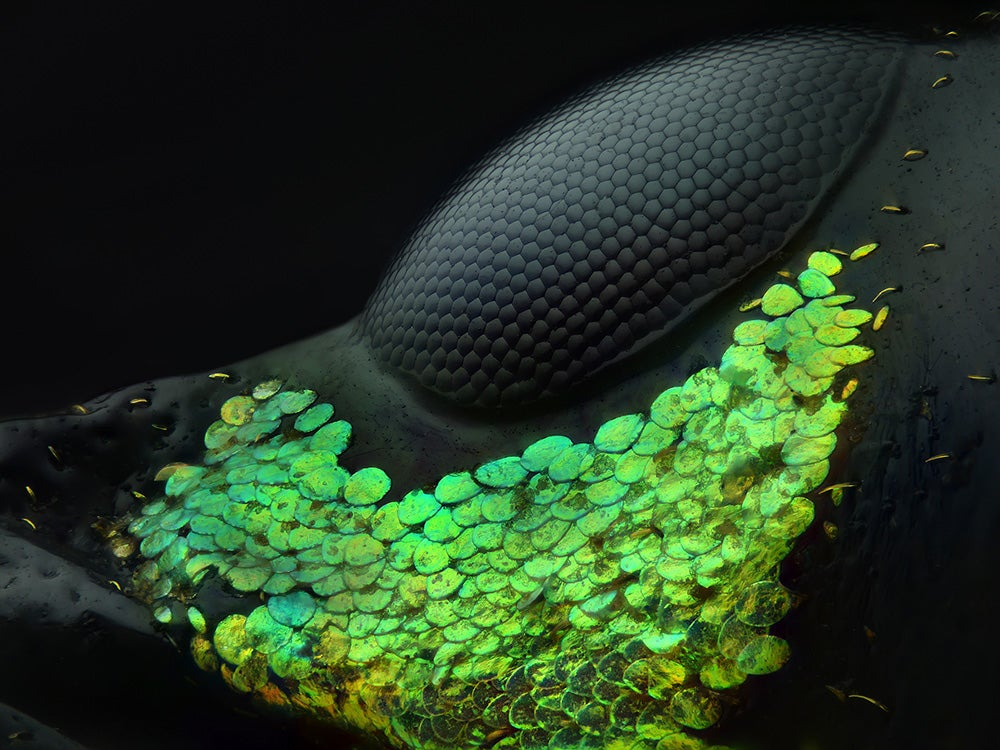 These are 2018's winners of Nikon's Small World Photography contest