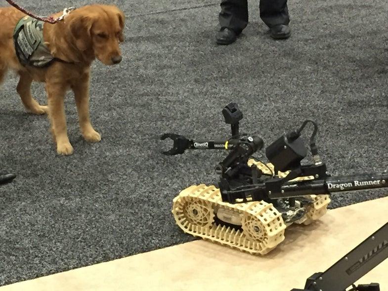 Service Dog And Dragon Runner Robot