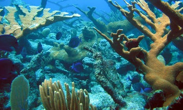 The Sounds Of Living Coral Reefs Are Breathtaking And Important