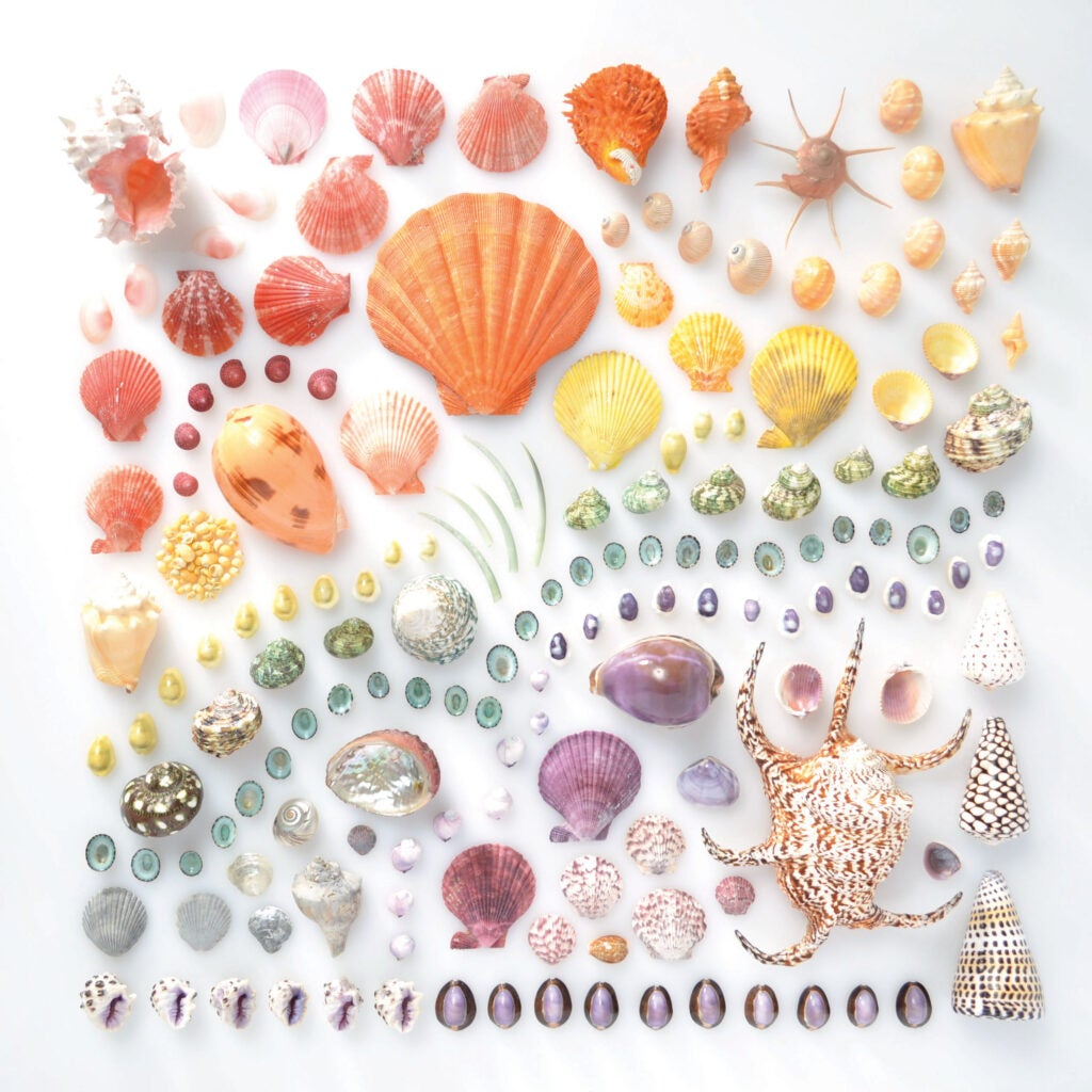 """""""Shells"""