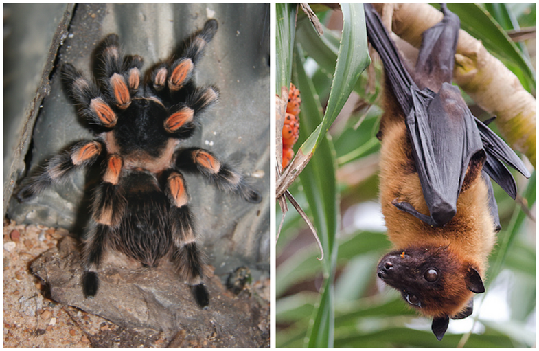 Spider and a bat