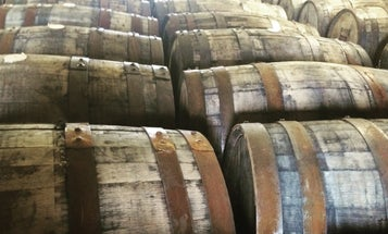 What Does The Deadly Oak Epidemic Mean For Whiskey?