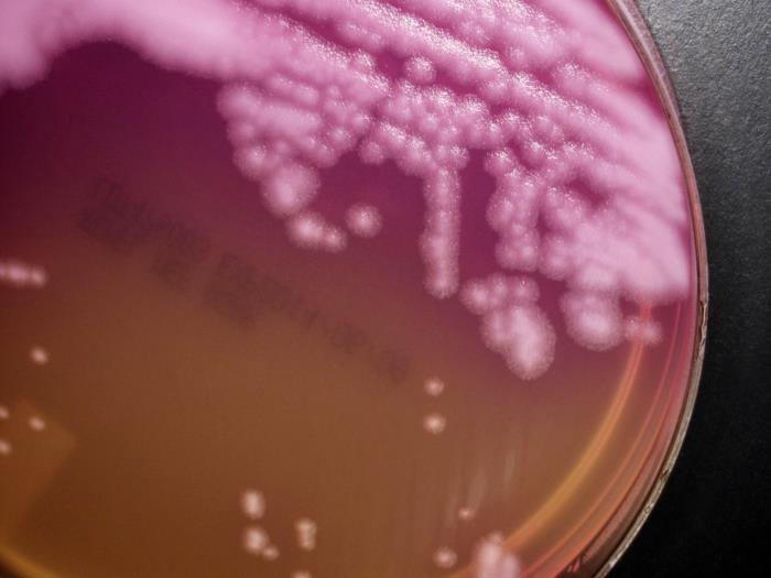 Anthrax Scare At The CDC