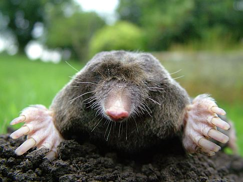 We Might Have a Mole